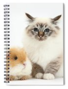 Birman Cat And Frizzy Guinea Pig Spiral Notebook