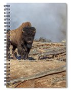 Bison And Geyser Spiral Notebook