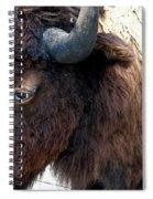 Bison Bison Up Close Spiral Notebook