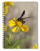 Bitterweed And Black Wasp Spiral Notebook