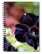 Black And Velvety Spiral Notebook