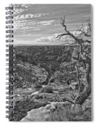 Black And White Image Of Tree Spiral Notebook