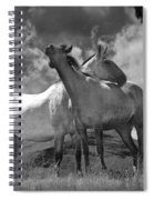 Black And White Photograph Of Montana Horses Spiral Notebook