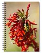 Black And Yellow Garden Spider 1 Spiral Notebook