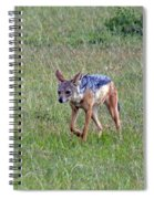 Black Backed Jackal Spiral Notebook