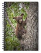 Black Bear Cub Hanging On Spiral Notebook