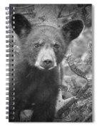 Black Bear Cub In A Pine Tree Spiral Notebook
