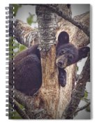 Black Bear Cub No 3224 Spiral Notebook