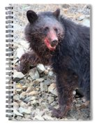 Black Bear Bloodied Lunch Spiral Notebook