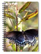 Black Beauty In The Bush Spiral Notebook