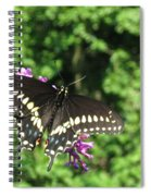 Black Beauty  Spiral Notebook