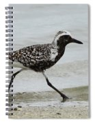 Black Bellied Plover Spiral Notebook