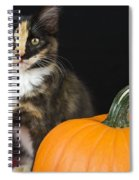 Black Calico Kitten With Pumpkin Spiral Notebook