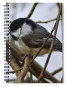 Black Capped Chick Spiral Notebook