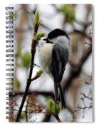 Black-capped Chickadee On Staff Spiral Notebook