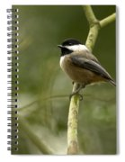 Black-capped Chickadee With Branch Bokeh Spiral Notebook