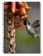 Black Chinned Hummingbird  Spiral Notebook