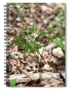 Black Cohosh Spiral Notebook