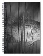 Black Crappie Or Speckled Bass Among The Reeds Spiral Notebook