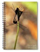 Black Dragonfly Love Spiral Notebook