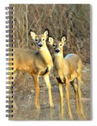Black Ear Deer Spiral Notebook