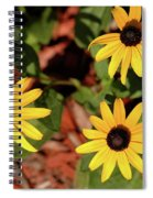 Black Eyed Susans Spiral Notebook