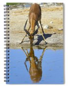Black-faced Impala Spiral Notebook