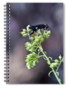 Black Flower Feeding Wasp Spiral Notebook