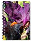 Black Iris Spiral Notebook