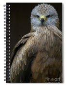 Black Kite 2 Spiral Notebook
