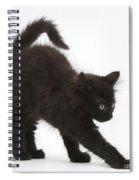 Black Kitten Stretching Spiral Notebook