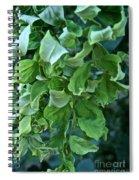 Black Locust Spiral Notebook