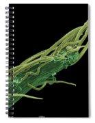 Black Locust Thorn, Sem Spiral Notebook