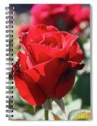 Black Rose Red Spiral Notebook