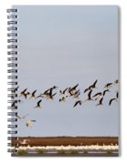 Black Skimmers In Flight Spiral Notebook