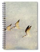 Black Skimmers On The Move Spiral Notebook