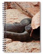 Black Snake Spiral Notebook