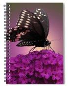 Black Swallowtail 1 Spiral Notebook