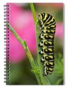 Black Swallowtail Caterpillar On Garden Spiral Notebook
