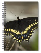 Black Swallowtail Din103 Spiral Notebook