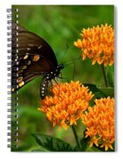 Black Swallowtail Visiting Butterfly Weed Din012 Spiral Notebook