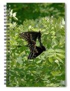 Black Swallowtails Mating Spiral Notebook