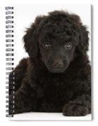 Black Toy Poodle Pup Spiral Notebook