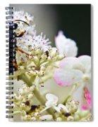 Black Wasp 3 Spiral Notebook