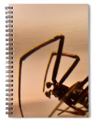 Black Widow Male Spiral Notebook