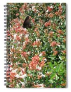 Black With Orange Dots Butterfly Spiral Notebook