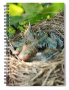 Blackbird Nest Spiral Notebook