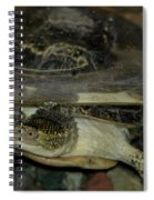 Blandings Swimming Turtle Spiral Notebook