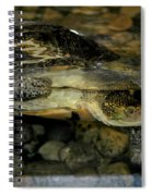 Blandings Turtle Spiral Notebook