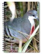 Bleeding Heart Pigeon Spiral Notebook